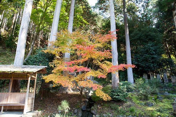 大原、勝林院の紅葉